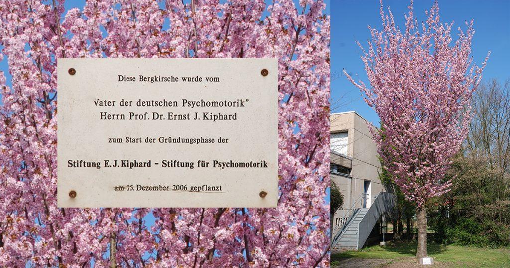 Kiphard Kirschblüte 2020